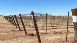 Sonoita Vineyards vineyards
