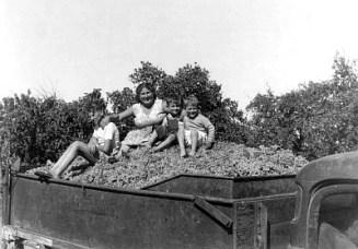 Casella family