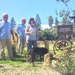 OCP organic vineyard