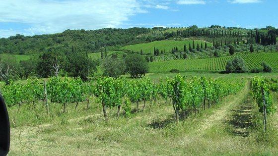 Vineyards near Sant' Antimo Abbey for Bottega Spa