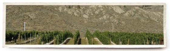 Harper's Trail Vineyard