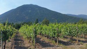 Grapevines at Recline Ridge Winery
