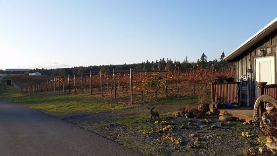 Enrico Winery vineyard