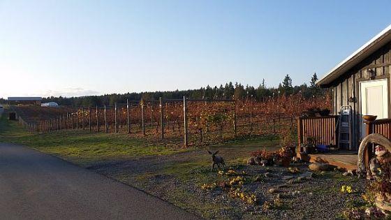 Enrico Winery vineyard