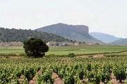 Honoro Vera region