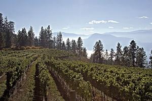 Coolshanagh vineyard (Image courtesy Coolshanagh Wines)