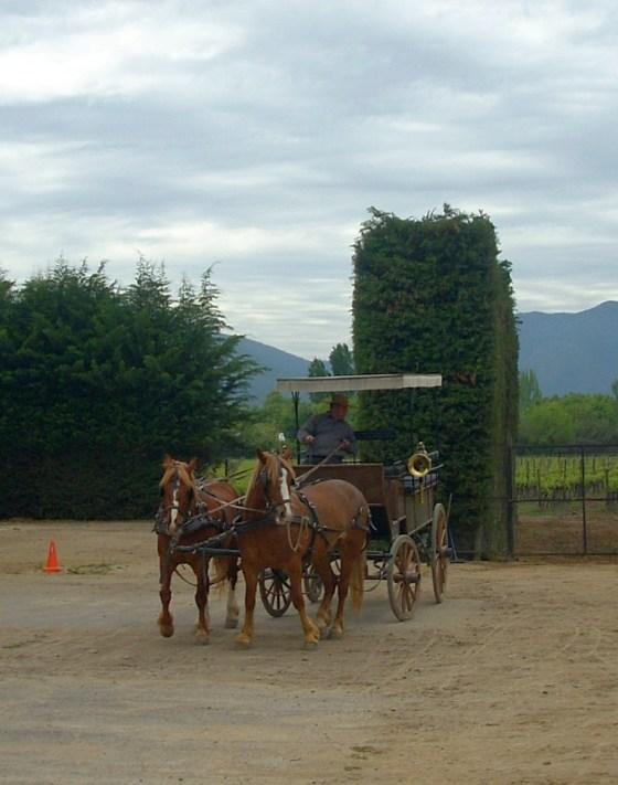 Viña Viu Manent horse drawn carriage to take me through the vineyards
