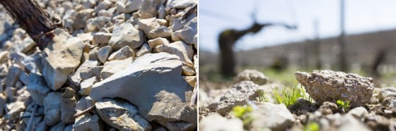 Portlandian and Kimmeridgian limestone from left to right (Images courtesy Vins de Chablis)
