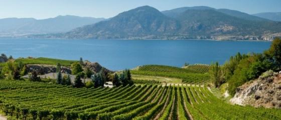 2019 BC Wine Grape Acreage Report