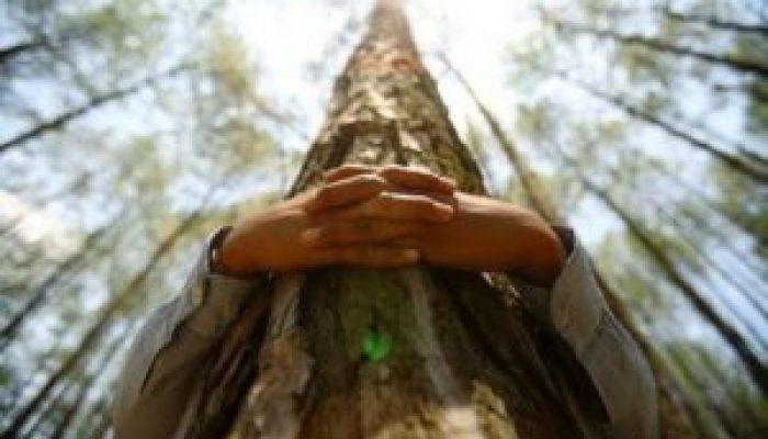 Целительная энергия деревьев: Как правильно воспользоваться их чудесной силой?