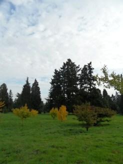 Arboretum Chèvreloup (12)
