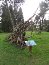 Arboretum Chèvreloup (19)