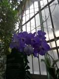 1001 Orchidées .. (10)