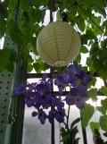 1001 Orchidées .. (15)