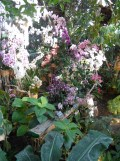 1001 Orchidées .. (22)