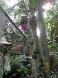 1001 Orchidées .. (23)