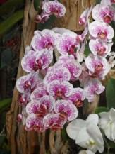 1001 Orchidées .. (32)