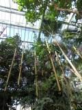 1001 Orchidées .. (43)