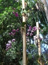 1001 Orchidées .. (44)