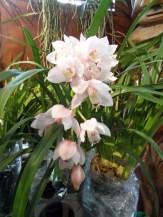 1001 Orchidées .. (57)