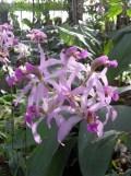 1001 Orchidées .. (9)