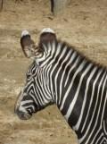 Zoo de Vincennes (109)