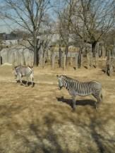 Zoo de Vincennes (112)