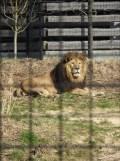 Zoo de Vincennes (120)