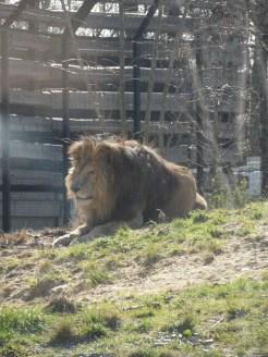 Zoo de Vincennes (132)