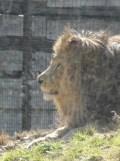 Zoo de Vincennes (133)