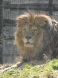 Zoo de Vincennes (134)