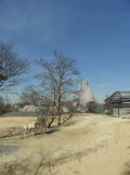 Zoo de Vincennes (142)