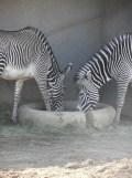 Zoo de Vincennes (156)