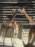 Zoo de Vincennes (175)