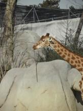 Zoo de Vincennes (176)