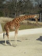 Zoo de Vincennes (178)