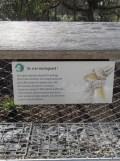 Zoo de Vincennes (18)