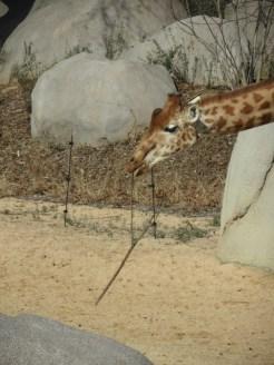 Zoo de Vincennes (183)