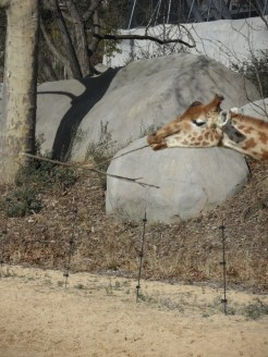 Zoo de Vincennes (184)