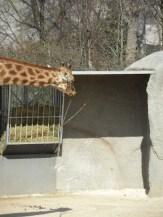 Zoo de Vincennes (189)