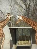 Zoo de Vincennes (194)
