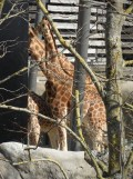 Zoo de Vincennes (205)