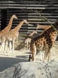 Zoo de Vincennes (208)