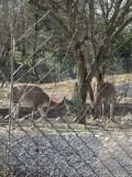 Zoo de Vincennes (23)
