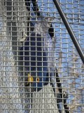 Zoo de Vincennes (234)