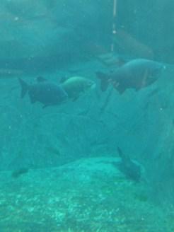 Zoo de Vincennes (274)