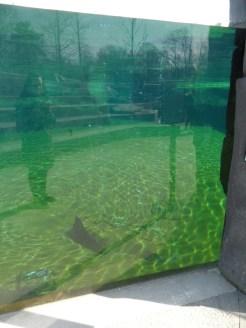 Zoo de Vincennes (28)
