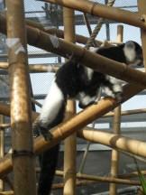 Zoo de Vincennes (295)