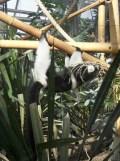 Zoo de Vincennes (296)