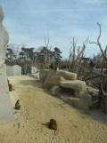 Zoo de Vincennes (354)